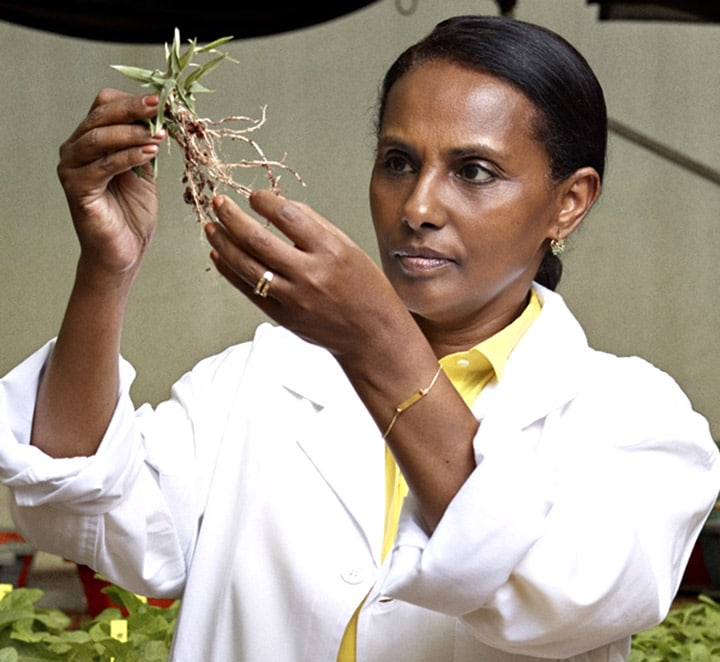 Segenet Kelemu: the Ethiopian scientist woman, Africa prize-winner of Oréal-Unesco Prize for women and science! - Africa Top Success