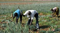 The 17th farmers' national day is luxuriously getting ready by public authorities of Burkina Faso. This event planned from 10th to 12th April 2014 coincides with the year of agriculture […]