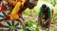 Massey Ferguson, la marque mondiale d'AGCO (NYSE:AGCO) organise le 08 avril 2016, la rencontre internationale sur la mécanisation des fermes «Vision of the Future» dans la Ferme du Futur AGCO […]