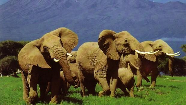 kenya-tourisme