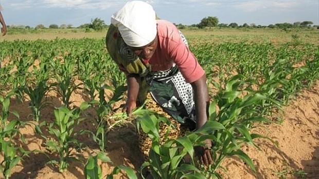 AGRIHACK TALENT TOGO: les Tic au service du secteur à agricole
