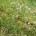 Des chercheurs ivoiriens travaillent sur l'utilisation de la plante Chromolaena odorata communément appelée « Sékou Touré » dans la fertilisation du sol. La jachère à base de la plante « […]
