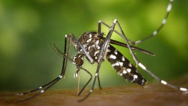 paludisme-afrique