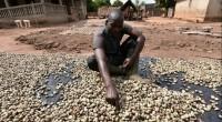 Les chefs d'entreprise ivoiriens, spécialisés dans la transformation du cajou bénéficient d'une formation de 3 jours afin de mieux conquérir le marché international. Initié par l'Alliance Africaine du Cajou, en […]