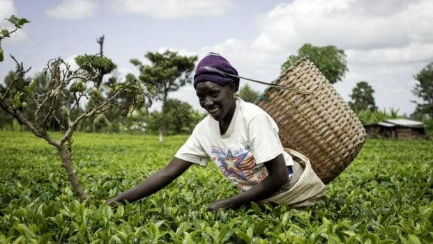 Agriculture-en-Afrique
