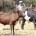 (Centrafrique Actu)- Le Chargé de mission en matière d'agriculture au Ministère de l'Agriculture et du Développement rural, Monsieur Abel Pkawilina Namkoissé a déclaré que la transhumance est un maillon essentiel […]
