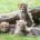 Selon une étude publié dans la revue américaine « Proceedings of the National Academy of Sciences » (PNAS), les guépards seraient en voie de disparition. Cet animal terrestre, le plus […]