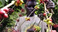 En Afrique l'agriculture contribue de plus en plus à la réduction du chômage. Selon les chiffres de la banque mondiale, le secteur a fourni 65% des emplois en 2016 et […]