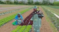 « Intensification de la production agricole et création d'emplois décents par le développement des aménagements hydroagricoles et de l'irrigation», c'est le thème de la campagne agricole de l'année 2016-2017 qui […]