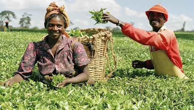 agriculture au Nigeria