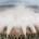 L'Ethiopie a inauguré samedi dernier le barrage le plus haut d'Afrique. Ce nouveau barrage devrait lui permettre de multiplier par deux, sa capacité énergétique. Le premier ministre, Hailemariam Desalegn, s'est […]