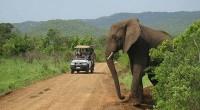 La Tanzanie est l'une des destinations très prisées des touristes occidentaux. Le secteur représente un maillon important de l'économie du pays. En 2016, le nombre d'arrivées de touristes sur le […]