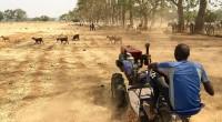 Lastart-up nigériane «Hello Tractor» vient de lancer un tracteur intelligent qui permet aux agriculteurs nigérians de pouvoir louer des tracteurs intelligents à des coûts très réduits. Créé par le Nigérian […]
