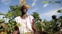 Au Nigéria, le secteur agricole est en passe de connaitre un essor grâce à la startup agri-tech Farmcrowdy. Co-fondée en septembre 2016 par Onyeka Akumah, Farmcrowdy vise accroître la productivité […]