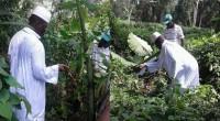 La reconversion est entamée. Après 22 ans à la tête de la Gambie, Yahya Jammeh s'est lancé dans l'agriculture. Mardi, des images de lui dans sa ferme, en Guinée équatoriale […]