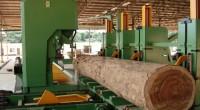 Dans le but d'encourager la production de matériaux issus du bois local, le Gabon s'attaque à l'abattage illégal. Le pays a interdit l'exportation de bois brut depuis 2010. Six ans […]