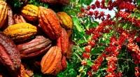 Tout semble désormais rentré dans l'ordre dans la filière café-cacao, suite à la mévente des fèves de cacao que les producteurs ont connu ces derniers jours. Le Gouvernement annonce ce […]