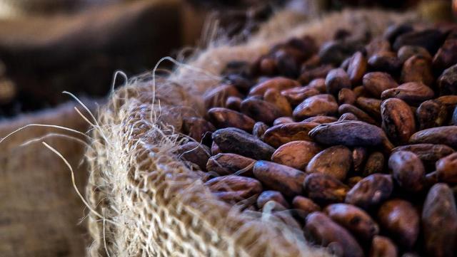 Les chocolatiers s'unissent contre la déforestation