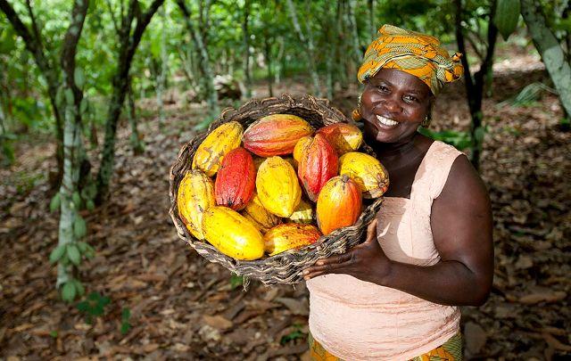 Ghana: objectif , un million de tonnes de cacao