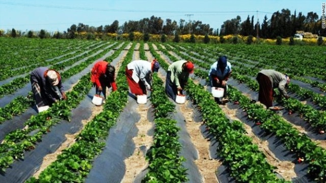 Afrique centrale: la BDEAC veut promouvoir une agriculture vivrière