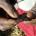 Le Projet de renforcement de la collaboration des acteurs et de l'action juridique pour l'élimination des Mutilations génitales féminines (MGF) au Burkina Faso et en Afrique de l'Ouest a réalisé […]