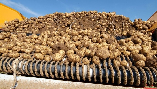 pommes-de-terre africa top success