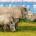 Les éleveurs de rhinocéros sud-africains pourront à nouveau vendre les cornes, exclusivement '' à l'intérieur'' du pays, a décidé la Cour constitutionnelle. Ceci est la deuxième fois que le gouvernement […]
