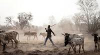 Au Mali, une exposition photographique sur la transhumance est visible jusqu'à la fin du mois d'avril 2017. Un photographe français a marché avec des nomades entre le Burkina Faso, le […]