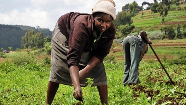 Agriculture_africaine