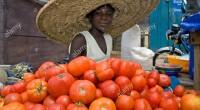 Quatre-vingt-dix-sept pour cent des entreprises sur 7.410 unités industrielles existantes dans le pays sont des petites et micro entreprises, a annoncé mardi, à Luanda, le consultant du ministère de l'Industrie, […]
