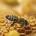 Actrices de la biodiversité, les abeilles sont de nos jours très menacées. Au Togo comme ailleurs dans le monde, une quantité considérable de colonies d'abeilles est en voie de disparition. […]