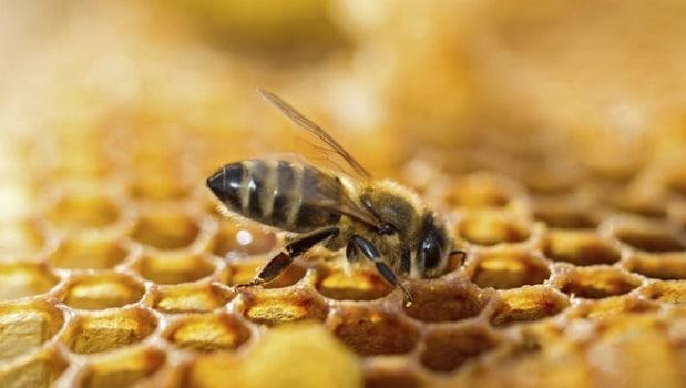 abeille ruche thinkstock