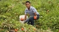 De fantastiques opportunités d'affaires s'offrent aux jeunes diplômés africains dans le secteur de l'agriculture et de l'agroalimentaire. C'est ce qui ressort en force du Forum africain des jeunes agripreneurs (dit […]