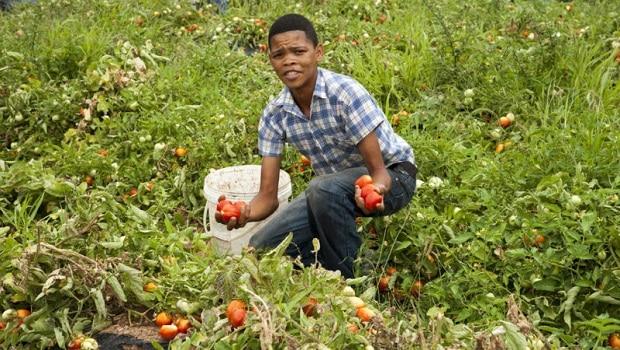Agriculture: de grandes opportunités s'offrent aux jeunes diplômés africains