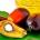 Les résultats de l'étude d'estimation du potentiel de terres adéquates et disponibles pour produire durablement de l'huile de palme, selon la norme RSPO dans 5 pays du bassin du […]