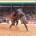 La 25ème édition du championnat national de lutte traditionnelle a livré ses champions dans les différentes catégories, le samedi 6 mai 2017 à Réo. Romaric Kawané du Nayala a été […]