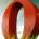 Opera, le développeur du moteur de recherche du même nom, a annoncé mardi vouloir investir 100 millions de dollars sur le continent au cours des deux prochaines années, pour accompagner […]