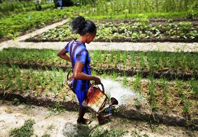 Centrafrique: l'agriculture, un secteur plus prometteur que le secteur minier