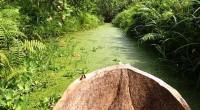 Spécialement composé d'une mosaique de paysages et d'écosystèmes avec des forêts sacrées, des lagunes, des plaines inondables, de la savane entre autres…, ce beau site a été ajouté au réseau […]