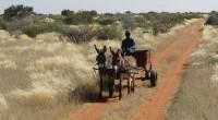 En Namibie, alors que de nombreuses rumeurs font état d'une annulation prochaine de la 2eme Conférence sur les terres, initialement prévue pour le mois de novembre 2016, le porte-parole du […]