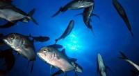 Selon un récent rapport du Département américain de l'agriculture (USDA), l'aquaculture tunisienne a enregistré une augmentation de 20% pour s'établir à 15200 tonnes en 2016. Les principales espèces ( en […]