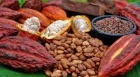La section cacao de la Côte d'Ivoire va en s'améliorant surtout en cette saison 2017-2018. D'après l'agence Bloomberg, quelque 1 million de tonnes métriques de fèves, a été déjà vendu. […]