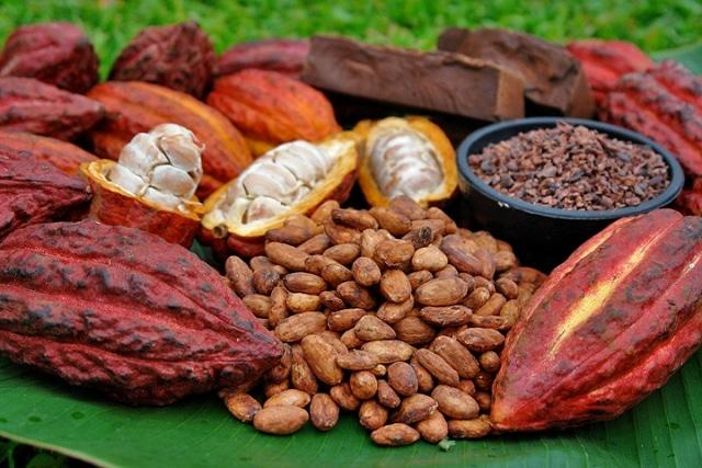 Côte d'Ivoire: la vente de cacao en plein essor !