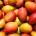 Selon une étude réalisée par l'Agence sénégalaise de promotion des exportations (ASEPEX) basé sur les données CIB de l'information des marchés, l'exportation des mangues ouest africaines pourraient augmenter dans certains […]