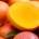 En vue de limiter le gaspillage dans le secteur agricole, les acteurs de la filière mangue se sont réunis ce lundi à la chambre de commerce et d'industrie de Ziguinchor […]