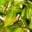 Devenir millionnaire au Madagascar, surtout dans le nord du pays où la récolte de la vanille bat son plein depuis la fin du mois de juin est fort probable. L'exportation […]