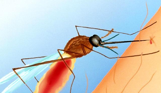 Lutte contre le paludisme au Mali: la pilule du siècle !