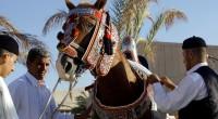 L'art de fabriquer les selles de chevaux, cette tradition propre au peuple libyen est en voie de disparition. Seuls quelques artisans maîtrisent encore la production du fameux cuir et les […]