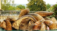 Pour une première en Afrique du Sud, la vente aux enchères des cornes de rhinocéros a débuté mercredi. A l'initiative de John Hume, le plus important éleveur de rhinocéros au […]