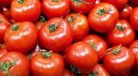 Appelée communément «la brousse de Dieu» dans un proverbe Haoussa, la ville de Kano, la deuxième ville du Nigéria mise sur l'agriculture notamment sur la ''tomate''. Avec sa population de […]